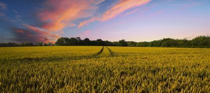 lied-publication-agriculture